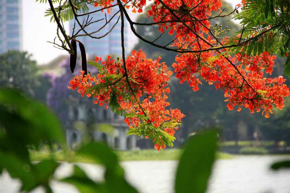 hanoi weather summer